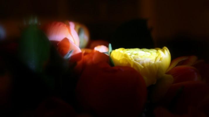 Fiori di luce di Lisus