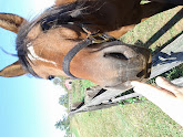 Photo: Horse 2