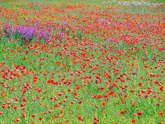 Rosso di primavera di RITA_CARLUCCI