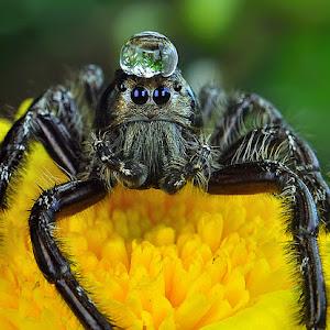spider_921 pixoto.jpg