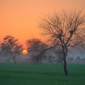 The Dying Sun by Hassan Malghani - Landscapes Sunsets & Sunrises ( pakistan, sunrises, village, sunset, sunsets, landscape photography, landscaping, sunrise, villages, landscape, landscapes, sun,  )