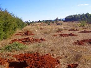 Photo: Préparation de la plantation