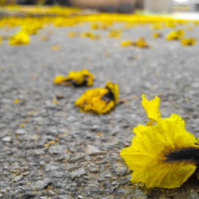 Fallen by Purbayan Bhattacharyya - Instagram & Mobile Android ( macro, nature, selective, street, yellow )