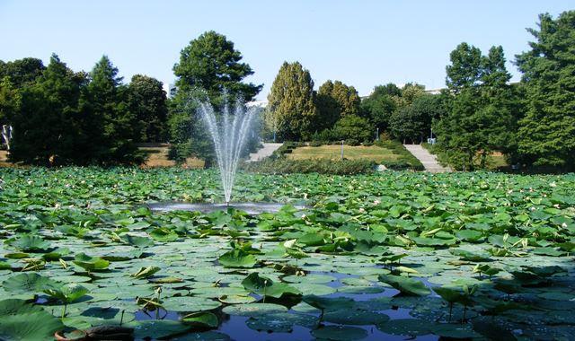 White Egypt Lotus in Circus Park Bucharest