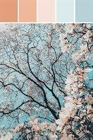 Blossom Palette - Pinterest Pin item
