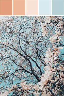 Blossom Palette - Brand Board item