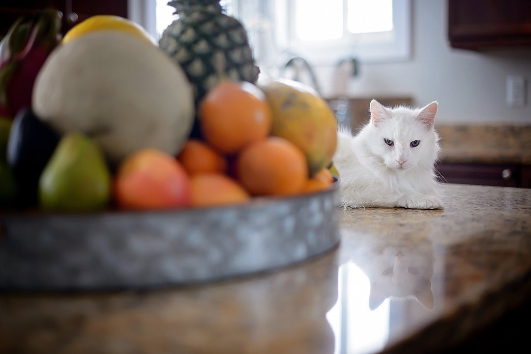 Fluffy white cat on a counter, just behind a large bowl of fruit.