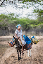 Photo: Mujer, mula y pimpinas de agua - comunidad de Jawapiakat - Maicao