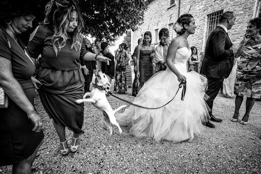 Wedding photographer Barbara Fabbri (fabbri). Photo of 29.08.2016
