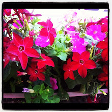 Photo: My wife is very happy with her new balcony flowers! #intercer #flower #flowers #nature #balcony #beautiful #red #green #yellow #leaf #leads #petal #petals #beauty #stem #color #plant #plants #garden - via Instagram, http://instagr.am/p/NUfRr-pfti/