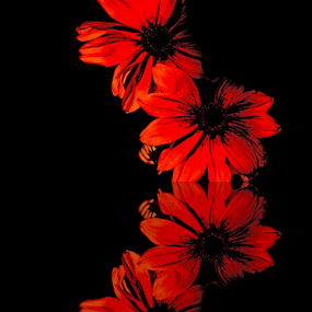 Red Reflection by Shirley Prothero - Flowers Flower Gardens ( red, reflections, flowers,  )