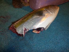 Photo: 半分、サメに持っていかれてるー!!