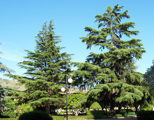 2 alberi di Antonio De Felice