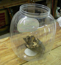 Photo: Large plastic jar holding shelf fungus