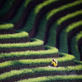 The Exterminator.  by Irvan Junizar - Nature Up Close Leaves & Grasses ( tea, hill, work, portrait, people, photography,  )