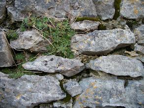 Photo: wall