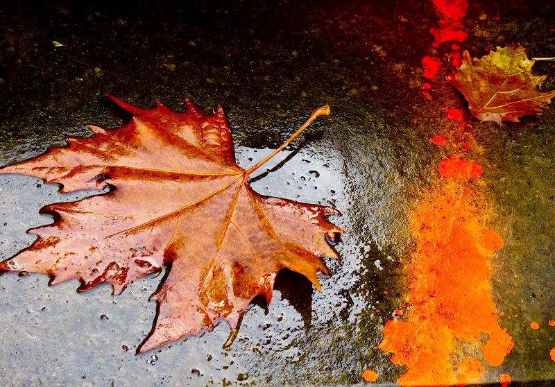 il colore dell'autunno di mariellaturlon