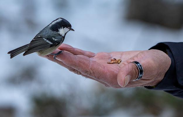 La mano che nutre gli uccelli