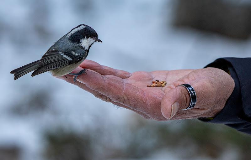 La mano che nutre gli uccelli di Aktarus