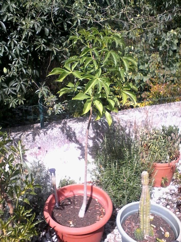 Bouture adansonia perrieri ZumVOxgFInPiCbfnZn5llReJai72rc5uX6BwC-8mplI=w708-h944-no
