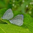 Summer azure