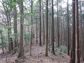 植林帯となる
