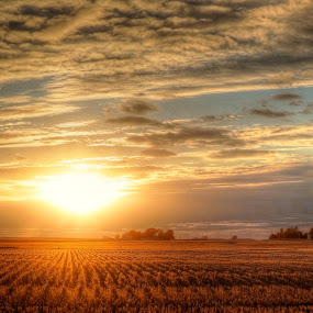 Fields of Gold by Fraya Replinger - Landscapes Prairies, Meadows & Fields ( farm, clouds, field, illinois, sunset, sun, country,  )