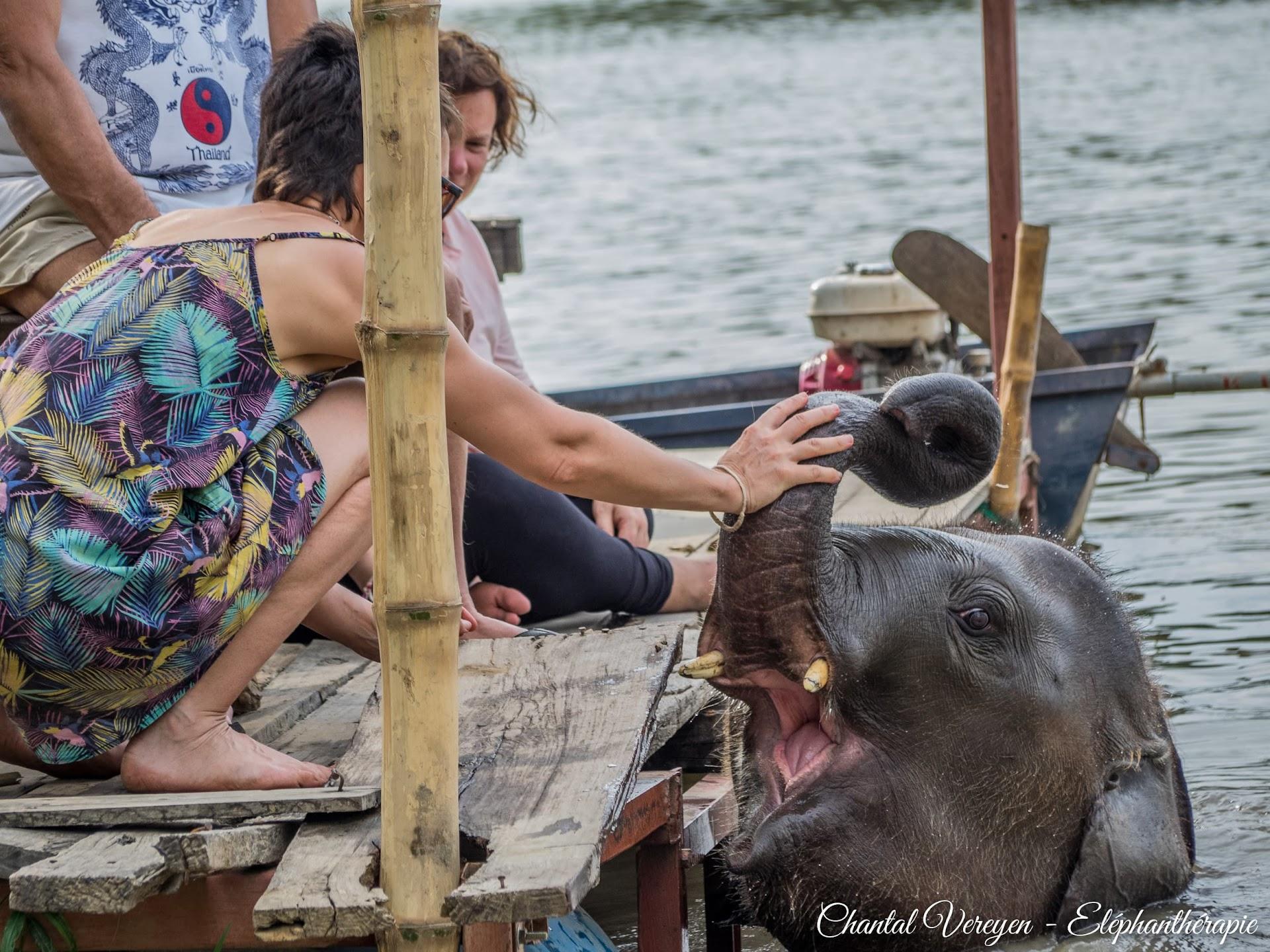 ChiangRaï,BaanMama,Staged'éléphanthérapieChantalVereyen