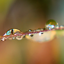 by Inger Lefstad - Nature Up Close Natural Waterdrops