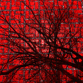 Tree on Bricks by Edward Gold - Digital Art Things ( digital photography, red bricks, bright, silhouette, trees, colorful, digital art,  )