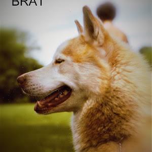 Copy of BRAT 81.jpg