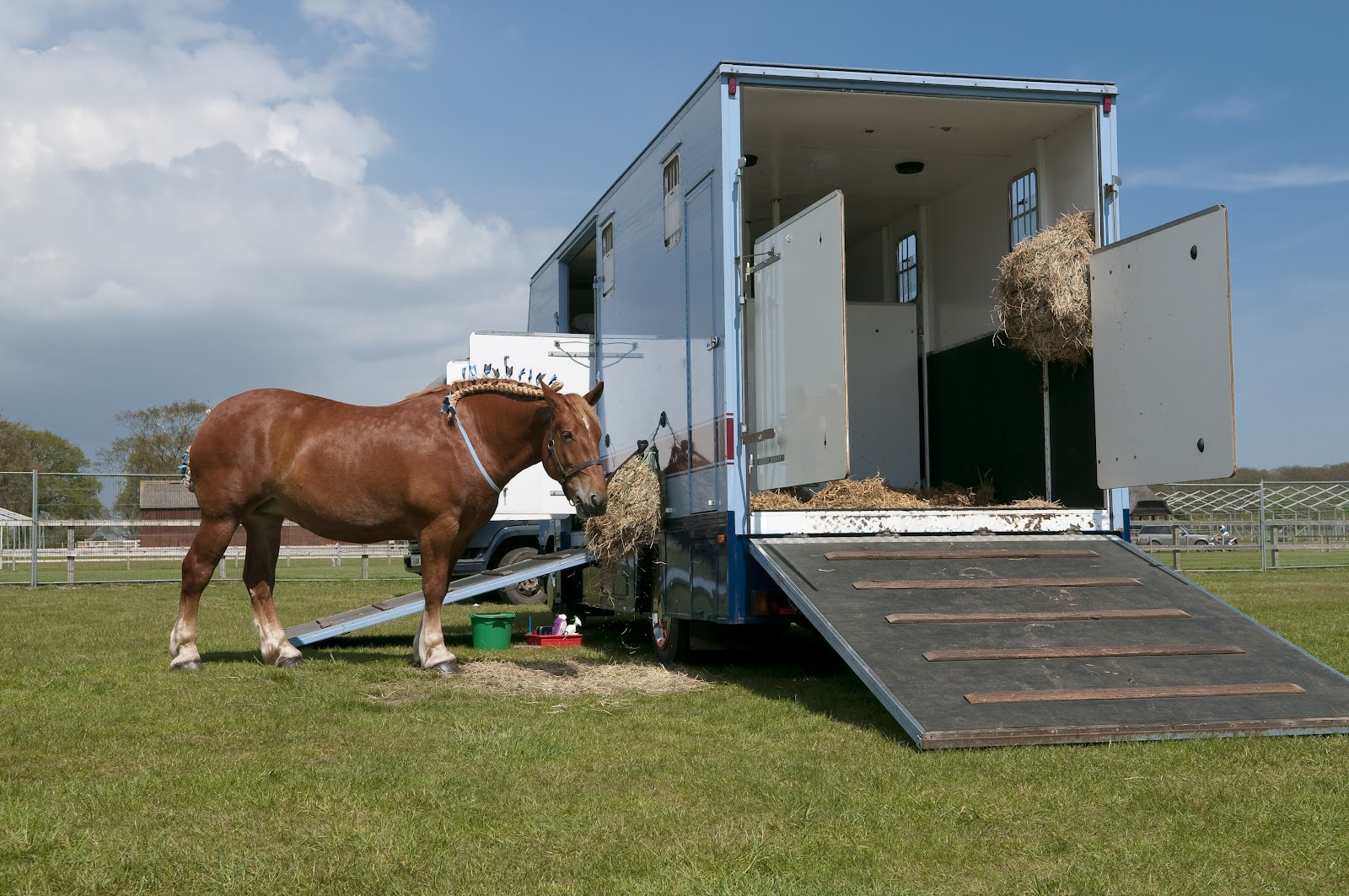 Horse next to trailer