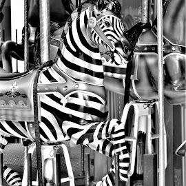 Merry-Go-Round Zebra by Mary Gallo - Artistic Objects Still Life ( zebra, artistic, still life, object, merry go round )