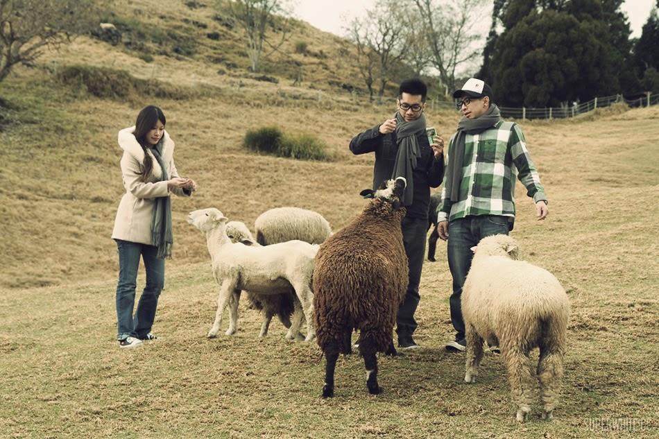 Taiwan Qing Jing 台湾清境绵羊之旅