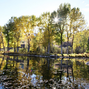 Fall reflections by Kristin Cheatwood - Landscapes Waterscapes ( reflection, fall, trees, lake, pond,  )