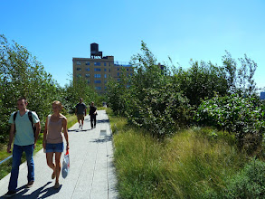 Photo: Plantings on the Southern end of the High Line are growing tall
