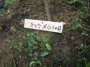 Photo: 「チョンメ」 実が非常にエグイ木である。 かつては有毒の実を潰して魚を捕る漁法も行われた(毒流し)、当地ではお正月のマイダマとして大切な木。 純白の花は美しく庭木としても好まれる。エゴの木とも呼ばれる。