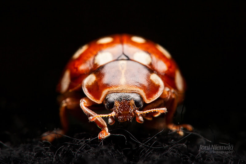 Photo: Portrait of a Lady Bug  #PlusPhotoExtract