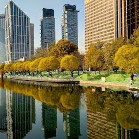 Beijing autumn reflections by Francisco Little - Instagram & Mobile Android ( china, reflections, yellow, autumn, beijing )