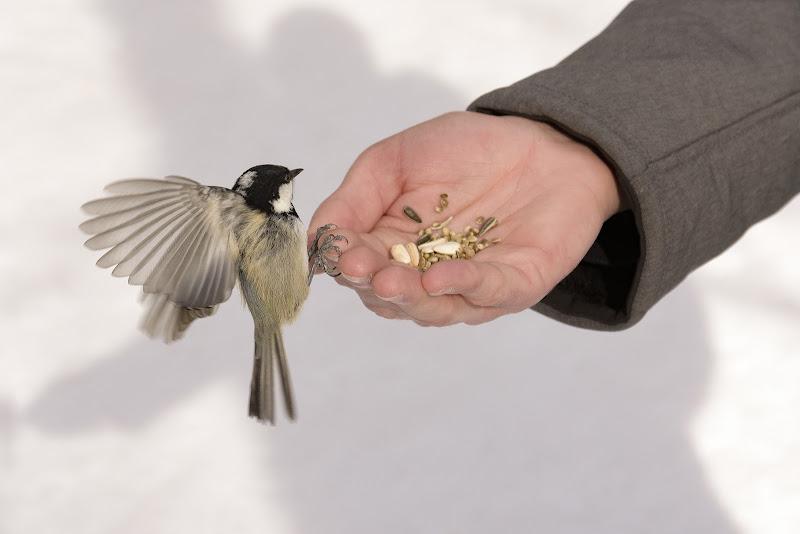 Dal palmo della mano di LorenzoVitali