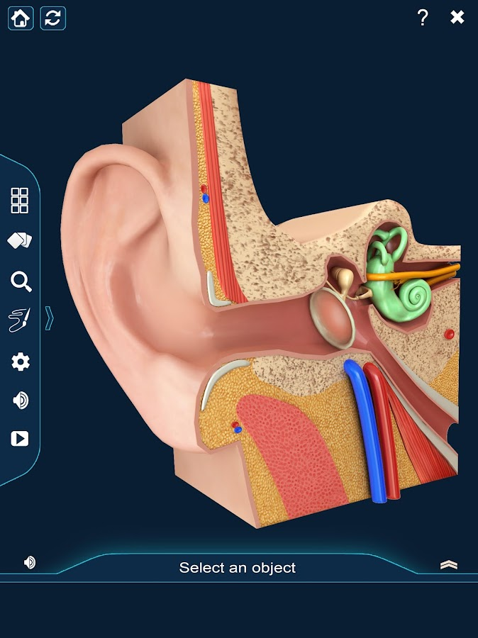 Ear Anatomy Pro. – Android-Apps auf Google Play