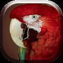 Colorful Parrots HD Live icon