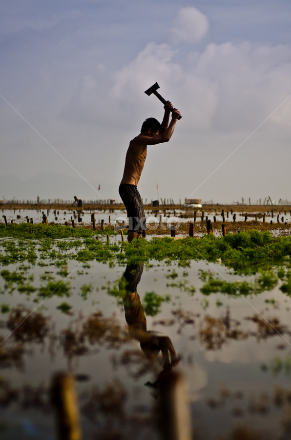 Hard Work by Wisnu Taranninggrat - News & Events World Events ( bali, farmer, seaweed, hard work, morning, people, activity )