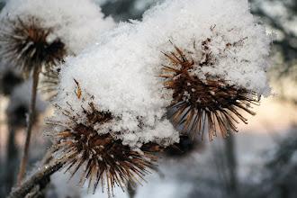 Photo: Lite frusna objekt i naturen.