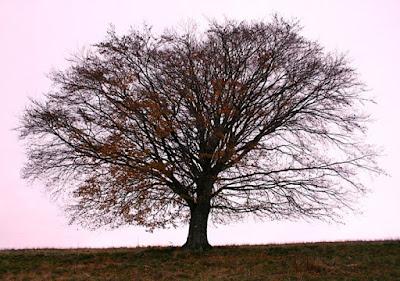 l'albero solitario di KAPOS