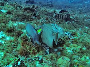 Photo: Sea Turtle eating