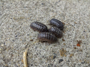 Photo: I was invited to a roly-poly meeting