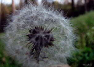 Photo: March 21, 2012 - Ain't It Dandy #creative366project curated by +Jeff M and +Takahiro Yamamoto