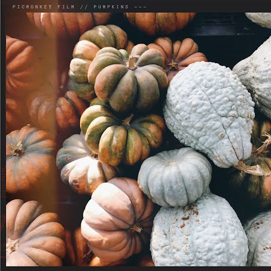 Autumn Gourds - Halloween Template