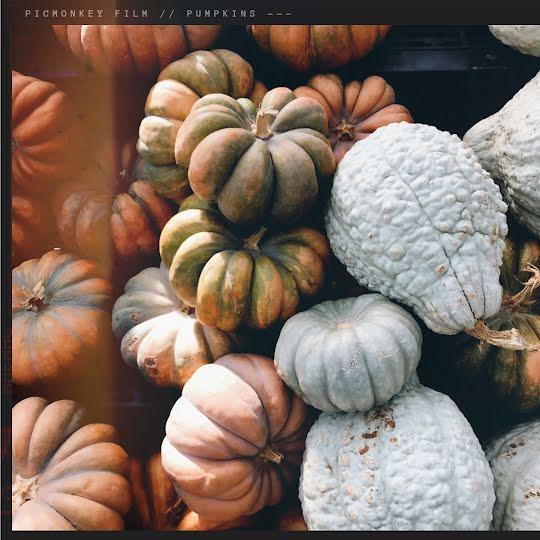 Autumn Gourds - Halloween Template